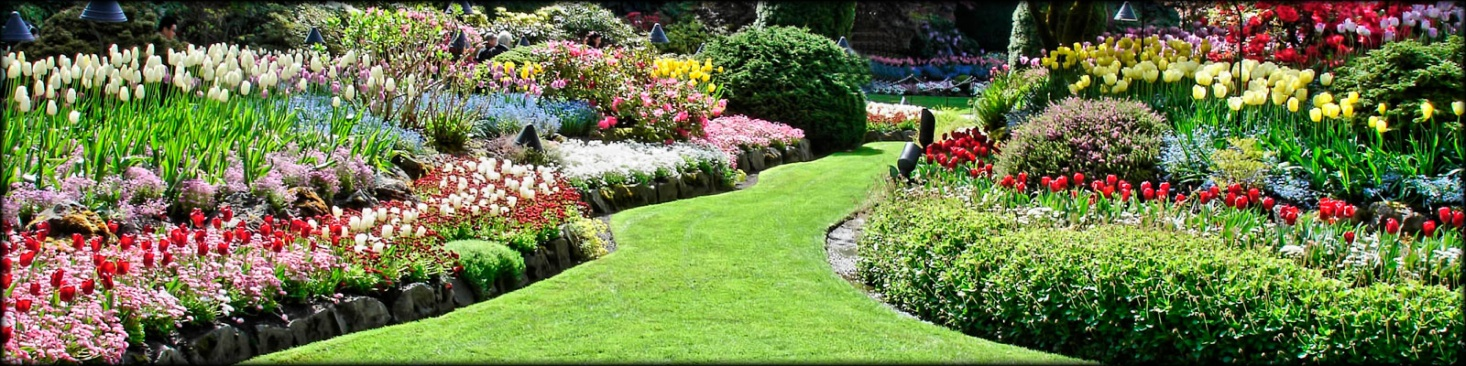 beautiful garden with many multi-coloured flowers